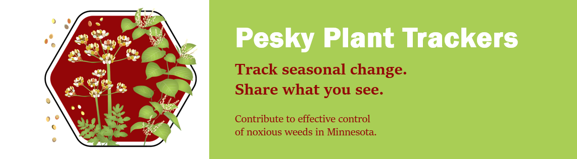 Pesky Plant Trackers. Track seasonal change. Share what you see. Contribute to effective control of noxious weeds in Minnesota.